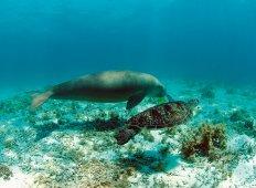 WWF-klumme – For a Living Planet