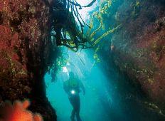 Gourmet Diver – dykning og gastronomi