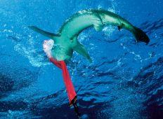 Hvorfor bider hajer? – vi sætter risikoen i perspektiv