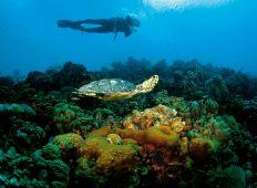 Bonaire – mekka for kystdykning