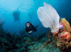 Cayman Islands – fødestedet for caribisk dykning