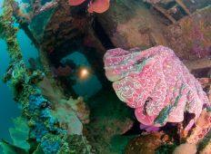 Salomonøerne – øriget fra fortiden