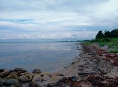 Kystleksikon #38 – Strandskoven Samsø