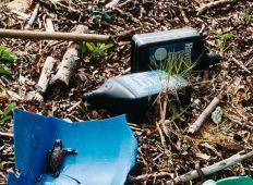 WWF-klumme – ude af øje, ude af sind