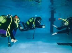 Seal Team – unge sæler i poolen