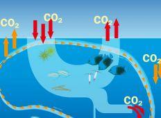 Naturklumme – havet som buffer i den globale opvarmning