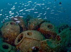 Naturklumme – succession i havet