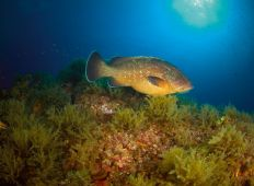 Det lille hav – Murcia på den spanske sydkyst
