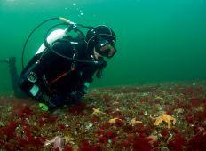 Kystleksikon #62 Barsø Landing – Sydøstjylland