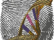 Naturklumme – det genetiske fingeraftryk
