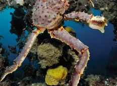 Første dyk med Nikon D3 – proff-fotografens superkamera