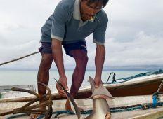 WWF-klumme – hvordan kan man redde et monster?