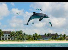 Delfiner, hajer og blå huller – storslået dykning på Bahamas