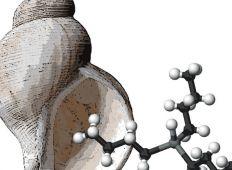 Naturklumme – hormonforstyrrende stoffer i havet