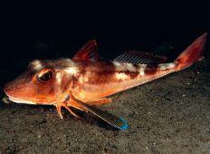 Levende liv – Sydlige fiskearter