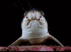 Hajfeber i Norge – ikke ligefrem dødens gab