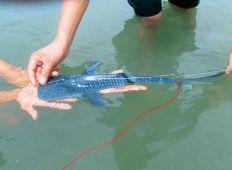 WWF-klumme – den lille haj og gribbene