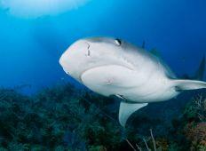 Dykningens myter – hvad er sandt og hvad er skrøne?