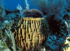 Fra Speyside til Crown Point – Tobagos bedste dyk