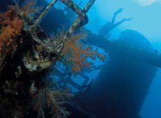 El Gouna – CDWS præsenterer: Rødehavet fra nord til syd