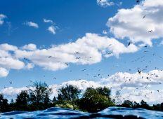 Livet i Damhussøen – mangfoldigt og rigt