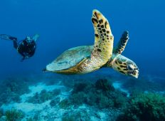 Safaga – CDWS præsenterer: Rødehavet fra nord til syd