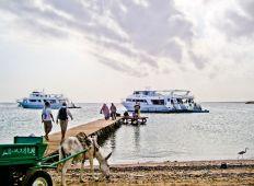Marsa Alam – CDWS præsenterer: Rødehavet fra nord til syd