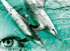 Doping – lær af havpattedyrene