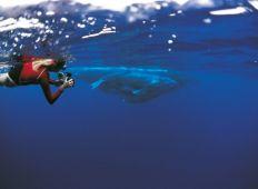 Svømme med kæmper – hvem pukler hvalerne for?