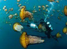 Eric Börjesson – med fokus på undervandsverdenen
