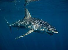 Sydafrika – et ægte dykkereventyr