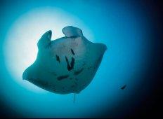 Thailands undervandsindbyggere - En marinebiologisk opdatering