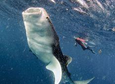 TOP 10 – dyk med store dyr