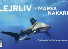 Lejrliv i Marsa Nakari – Det bedste af alle verdener