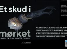 Et skud i mørket – Hvad er blackwater diving?