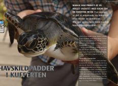 Havskildpadder i kufferten