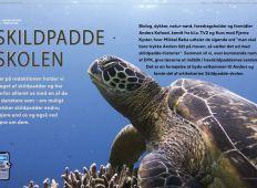 Skildpaddeskolen: Del 1 – Dykker, kend din havskildpadde