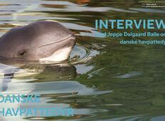 Danske havpattedyr – Interview  med Jeppe Dalgaard Balle