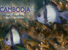 Cambodja – langt fra turiststrømmen
