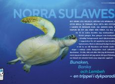Norra Sulawesi – Bunaken, Bangka och Lembeh. En trippel i dykparadis