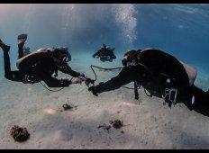 Fem ting, din instruktør ville ønske du havde gjort inden dit dykkerkursus