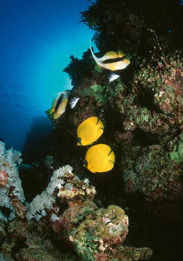 Afrika – Rødehavet fra A-Z
