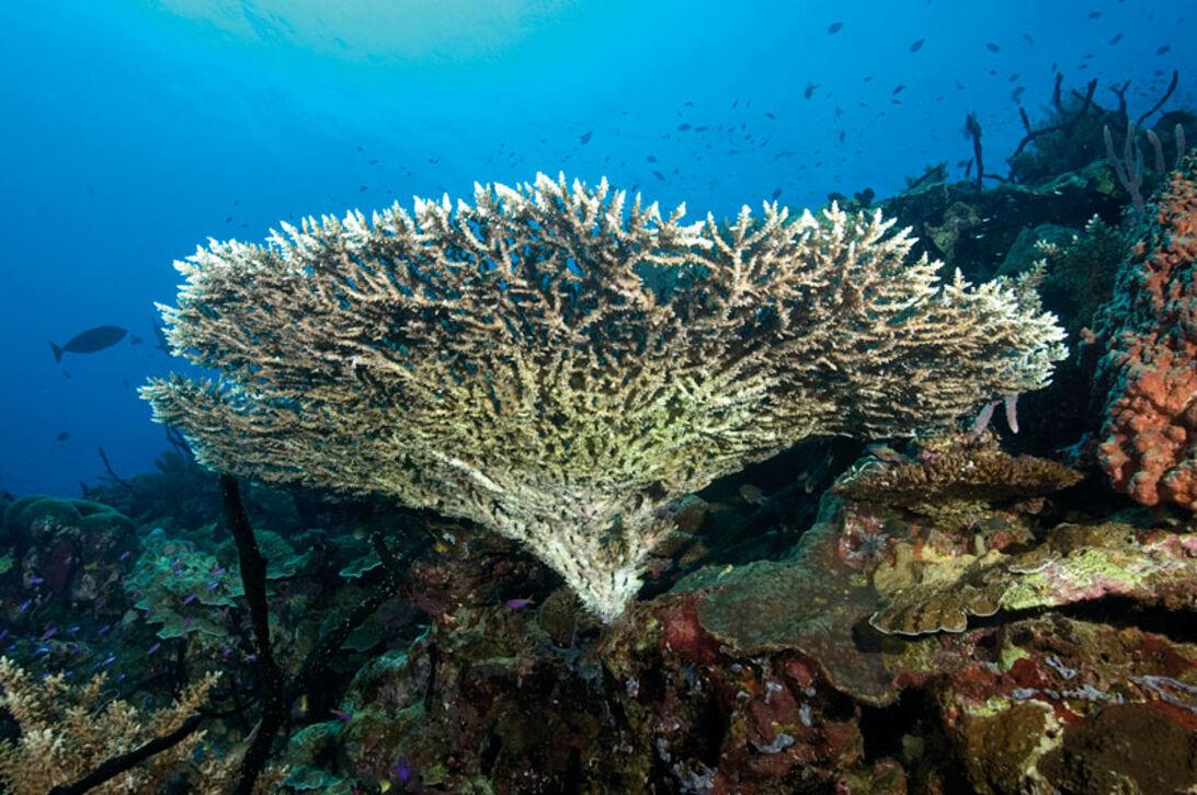 Koraller - økosystemet på Great Barrier Rief