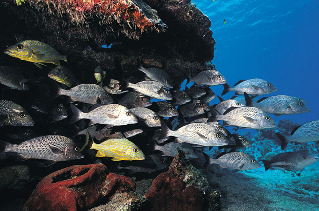 Caribien - Cayman Islands