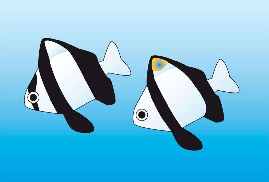Fav're nye fiskeverden - Hvorfor ser fiskene ud som de gør?