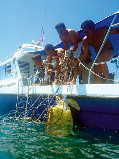 WWF-klumme – havskildpaddernes øer