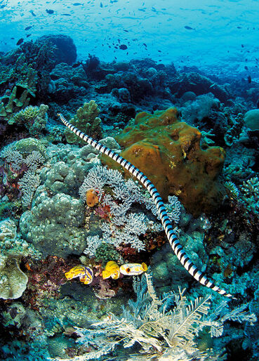 Havets krybdyr – skællede skabninger