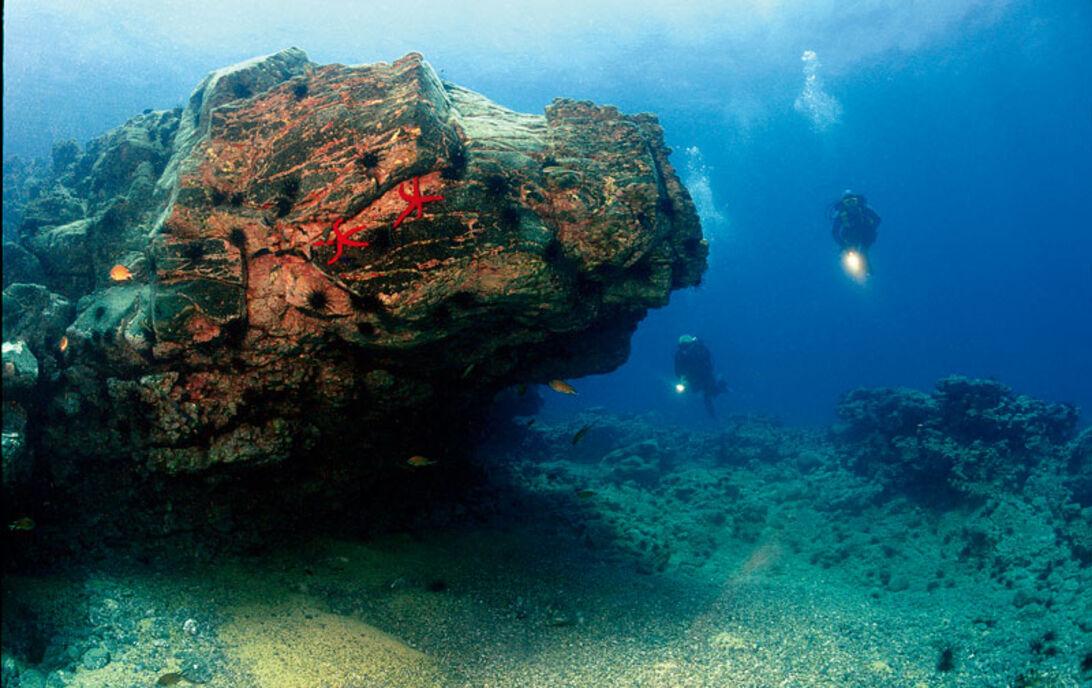 Fuerteventura – mød havets engle