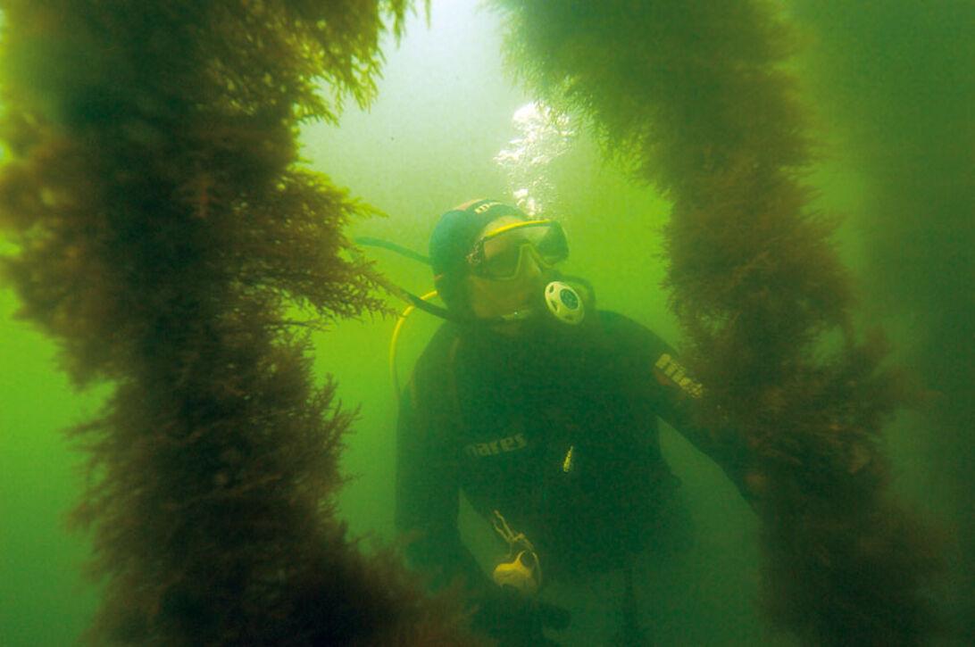 Limfjorden på menukortet – et besøg på Dansk Skaldyrcenter