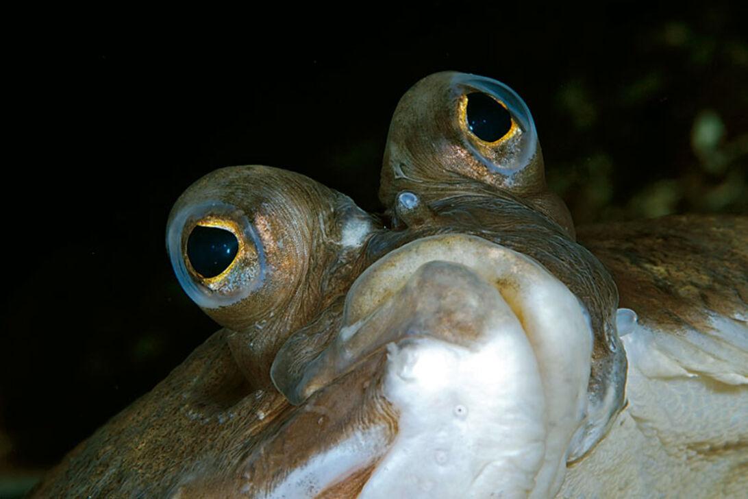 Fladfiskefamilien – en skæv historie